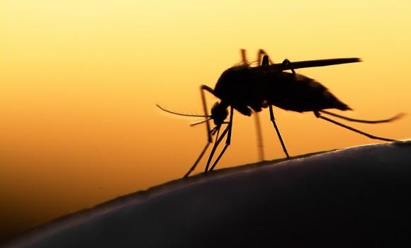 Paludisme : 3 décès et plus de 1.100 cas enregistrés