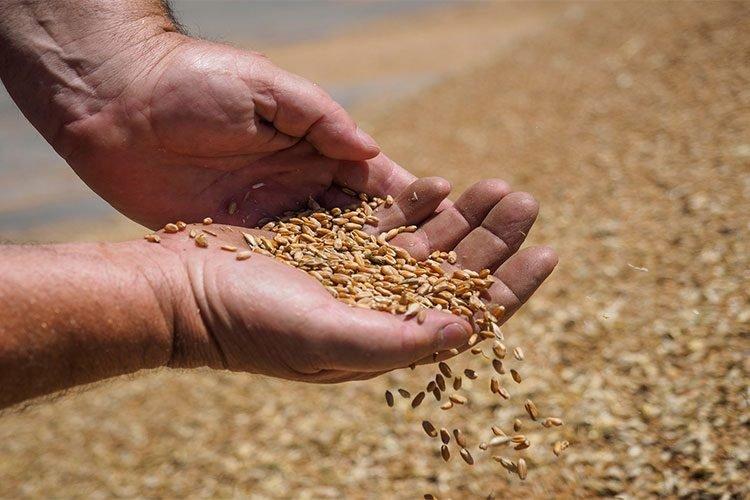 فضيحة القمح المستورد: تناقض بين وزارتي الفلاحة والتجارة