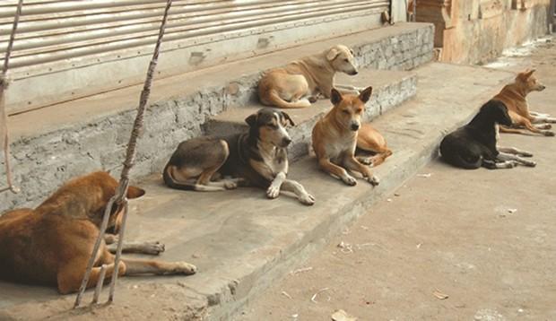 Tipasa : «Ammi Ahmed» vient de succomber à ses blessures, les chiens errants dictent leur loi à la tombée de la nuit